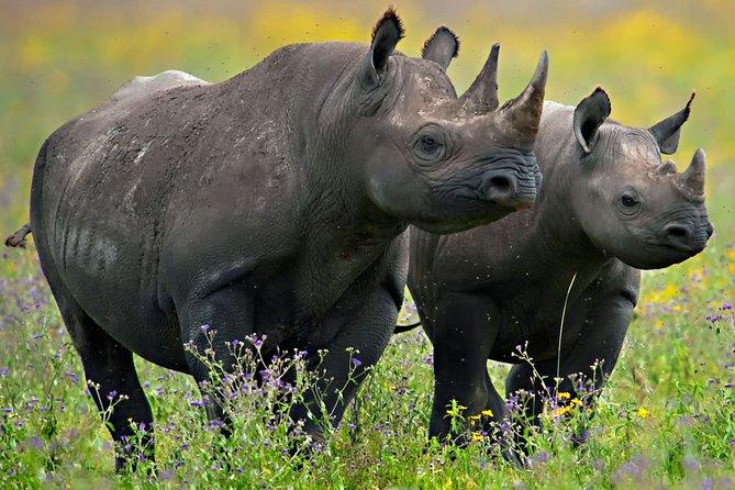 3-Day Tour in Ngorongoro, Tarangire and Lake Manyara National Parks