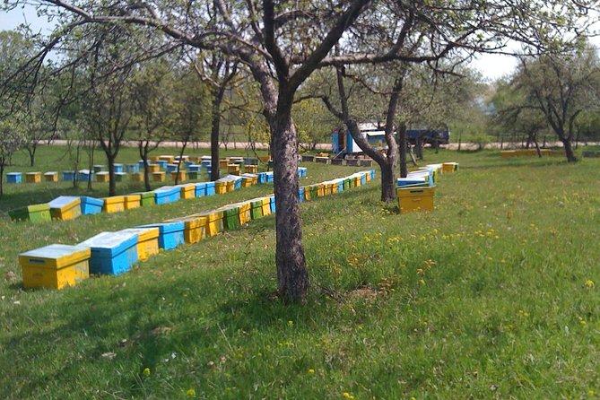 Bees Adventure in Romania