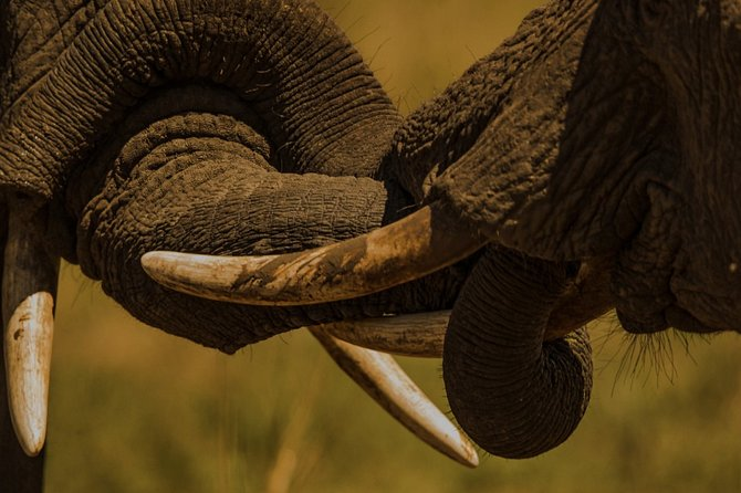 Private Full-Day Tour to Tarangire National Park in Arusha