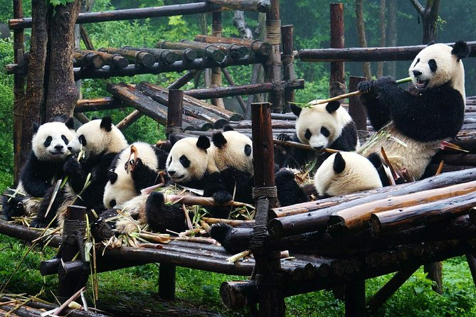 Private Chengdu Highlights Day Trip: Panda Base and City from Hangzhou by Air