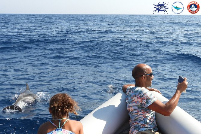 Whale & Dolphin watching | Meet the dolphins in Catania