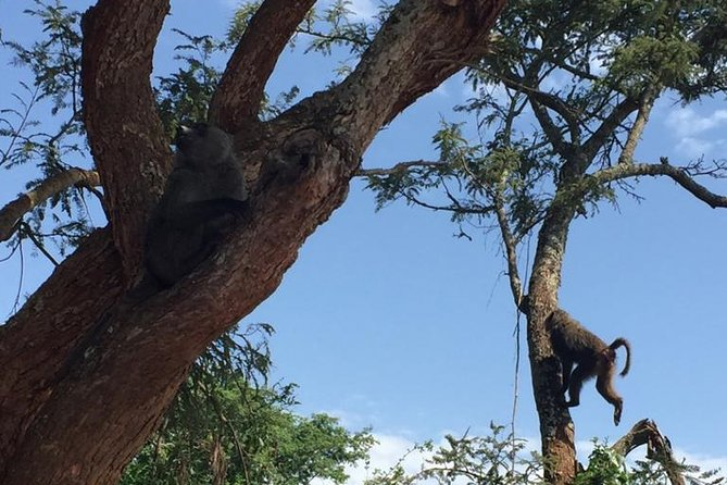 The playful nature of baboons