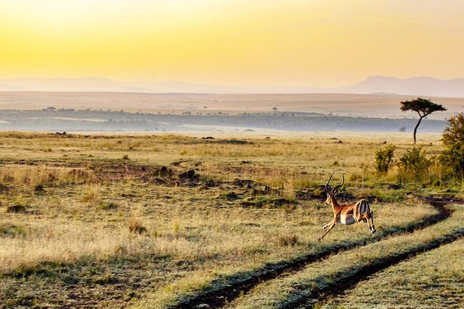 6 Days Ultimate Tanzania Safari