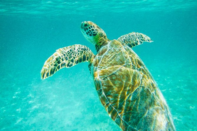Tulum Ruins & Turtle Express by Coba Sunset