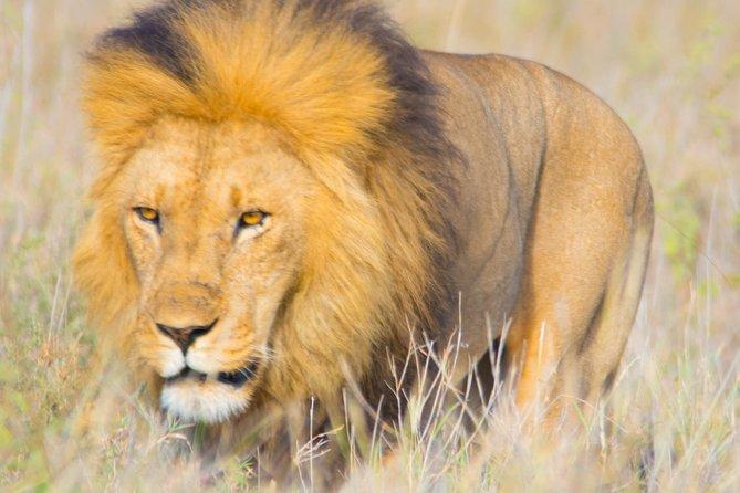 5 Days Lodge Safari.