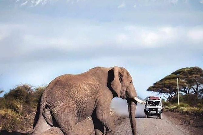 6 DAYS Murchison Falls and Queen Elizabeth National Park Experience