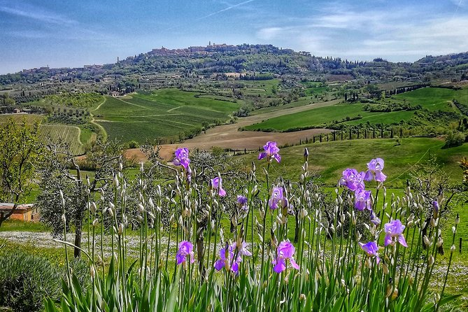 Montepulciano private guided tour