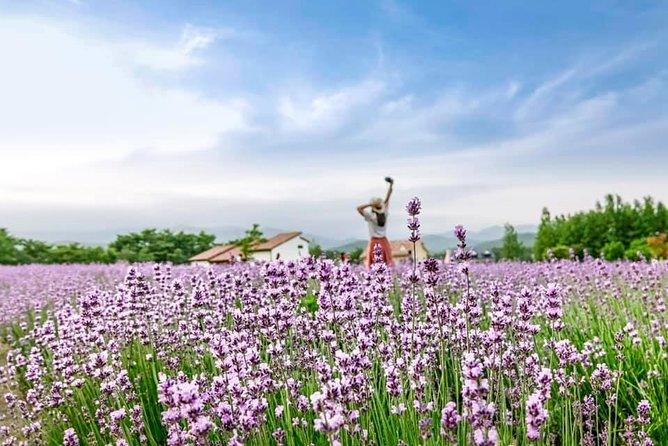 2020 Goseong Lavender Tour