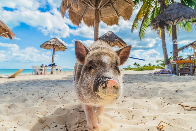 (Private Tour) Pig Island by Long-tail Boat: Kayaking and Private Beach Access