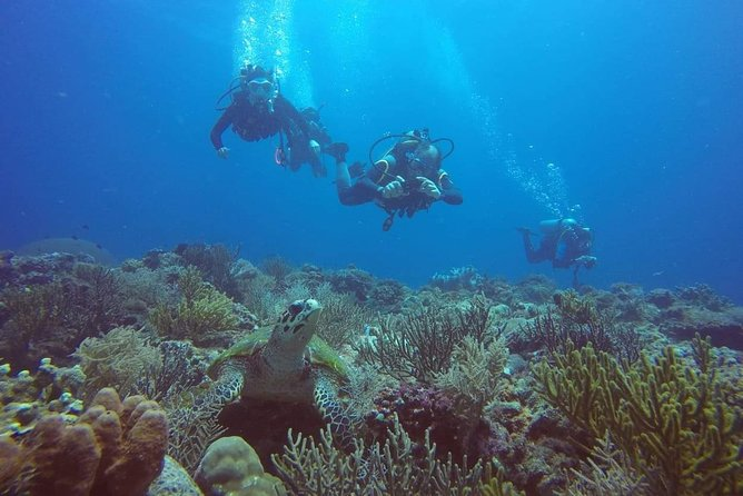 PADI Open Water Course 3-4 Days