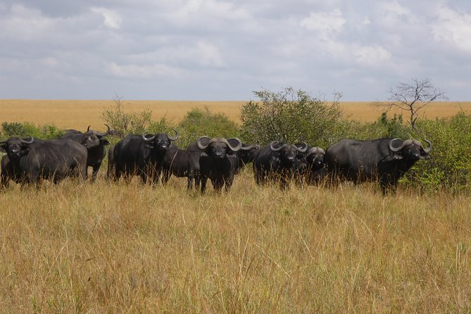 9 Days Safari to Amboseli , Lake Manyara, Ngorongoro, Serengeti and Maasai Mara