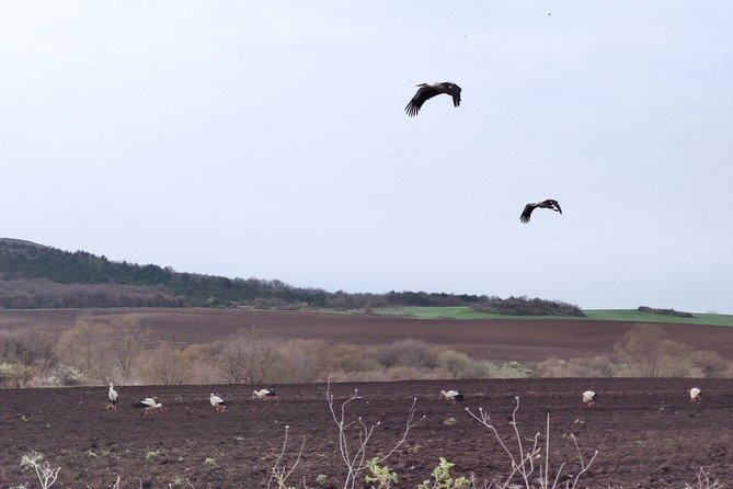 Vogels kijken naar Dragoman Marsh vanuit Sofia