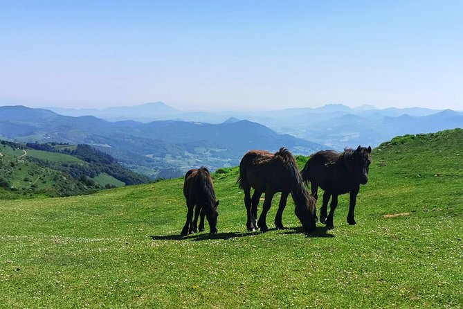 Basque MOUNTAINS, OCEAN & SANCTUARY of LOYOLA - Private Cultural Adventure