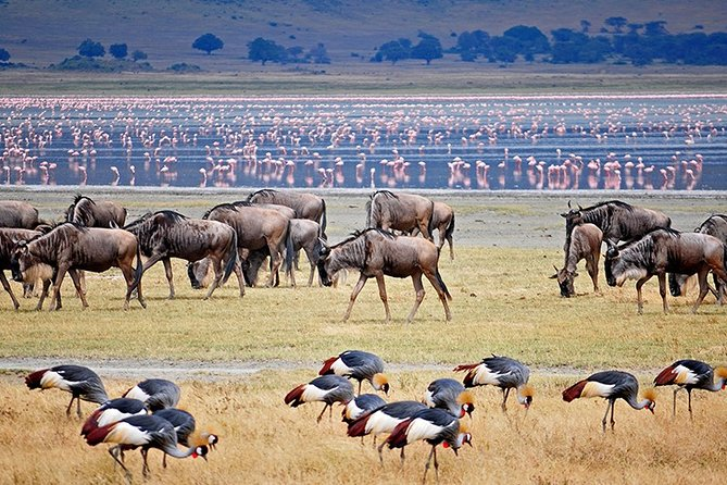 3-Day Tarangire Manyara and Ngorongoro Safari Camp