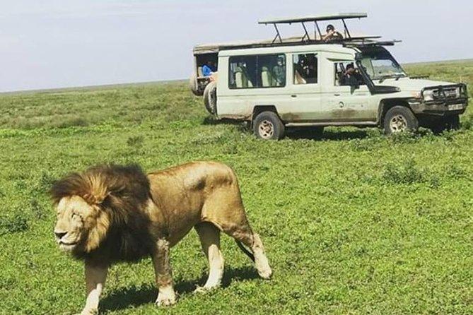 4-Day Group Safari (Serengeti,Ngorongoro&Tarangire)