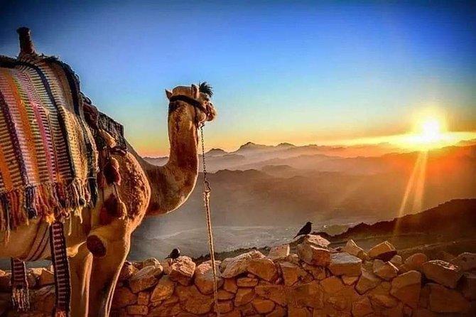 Sound and Light Show at Giza Plateau