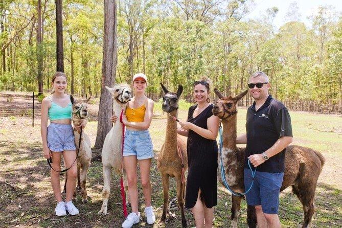 Llama Experience and Walk