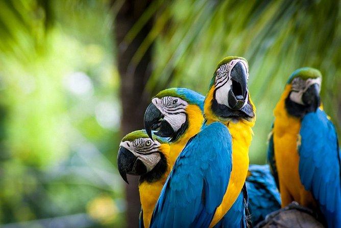 3-Day Tambopata National Reserve Tour