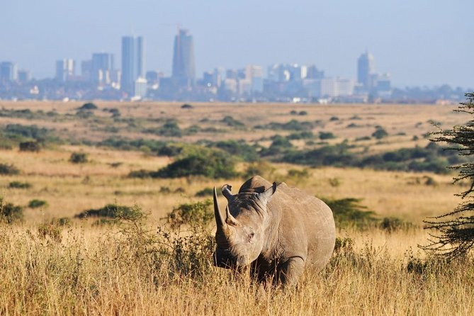 Nairobi Day Tour: Giraffe Center, Elephant Orphanage and Nairobi National Park