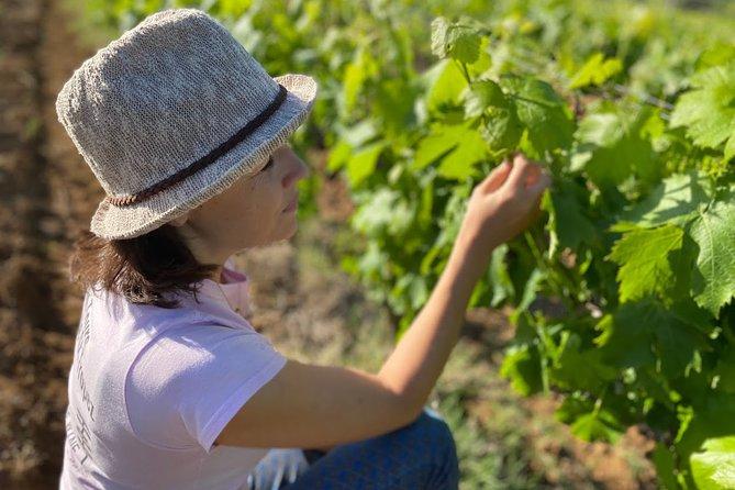Golfe de Saint-Tropez Wine Tour
