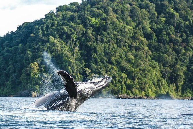 Whale Watching in the Colombian Pacific Coast Day Tour