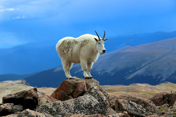 Private Full-Day Mount Evans & Red Rocks Tour from Denver