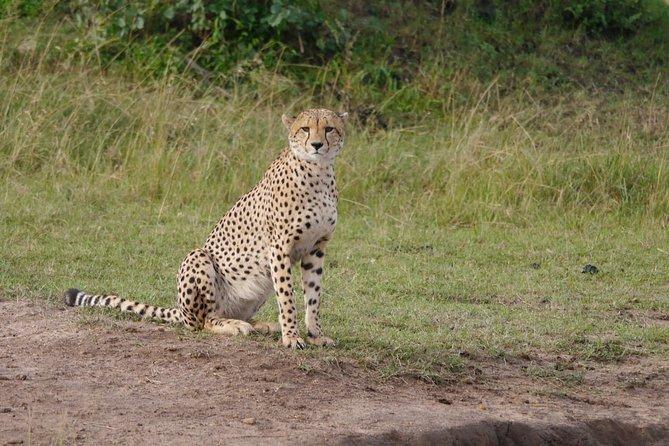 7 Days Group Tour to Maasai Mara, Nakuru, Naivasha & Amboseli national Parks