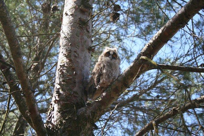Birdwatching Montes de Toledo Orientales