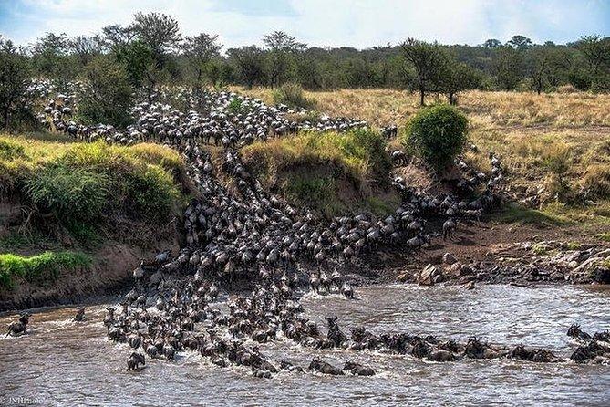 Serengeti Wildebeest Migration.