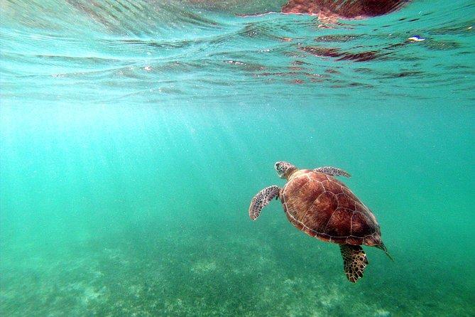 Private Turtles & Cenotes Adventure