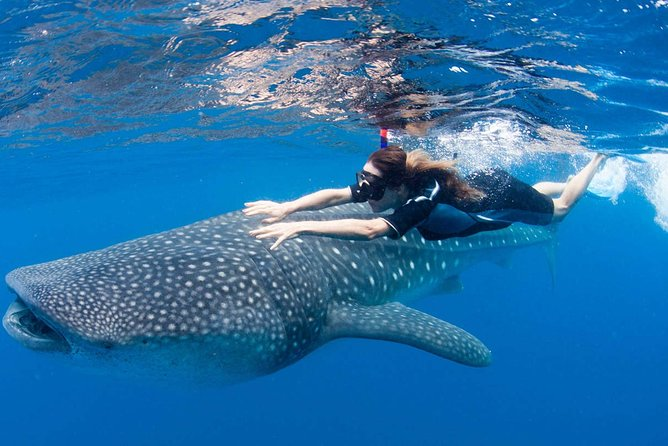 Swim with Whale Sharks from Cancun, Riviera Maya and Tulum