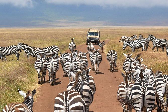 5-Day Serengeti and Africa's Big Five Safari