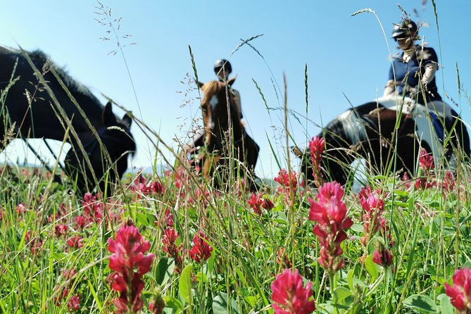 Horsebackriding - explore Tuscan nature