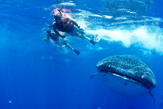 Private Whale Shark All Inclusive Experience