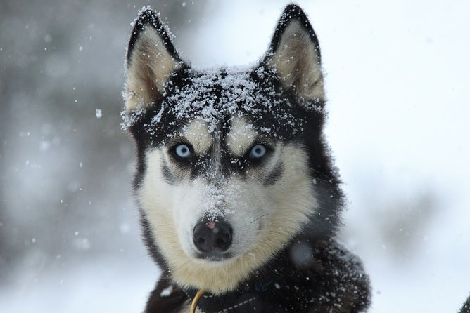 Exclusive Mushing Night Experience