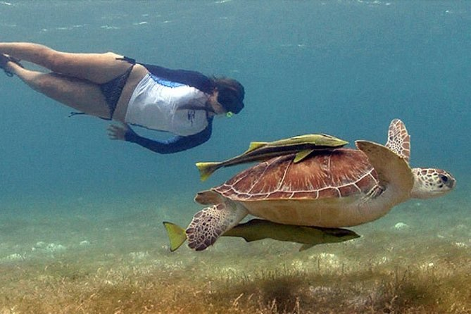 Half-Day Private Tour to Rose Island and Green Turtle Cay