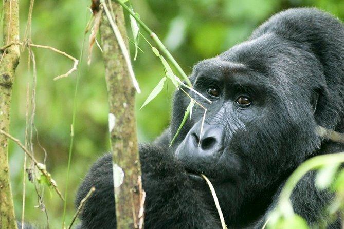 5-Day Safari Tour in the National Parks of Uganda