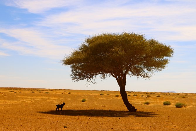 4 Days Private Tour from Agadir to Marrakech with overnight in Erg Chegaga Dunes