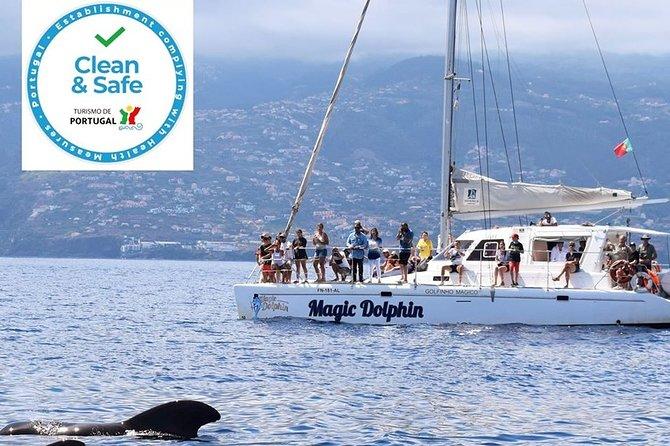 Observação de baleias e golfinhos da Madeira em um catamarã de luxo