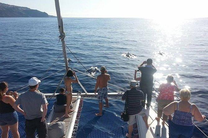 Observation des dauphins et des baleines dans un catamaran de luxe à Madère