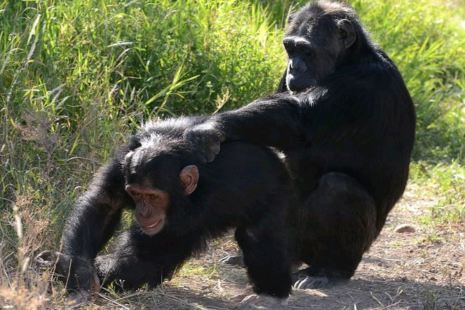 7 days best of uganda safari