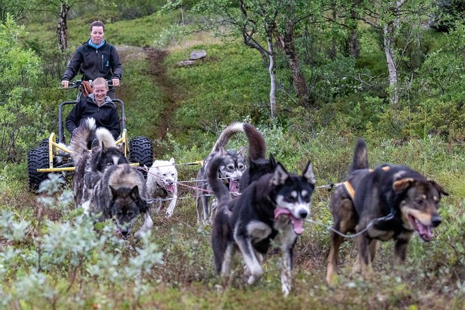 Husky Wagon