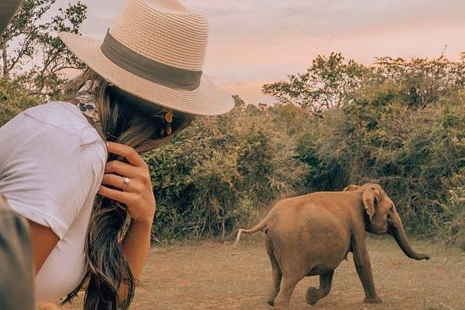 Morning Safari at Wilpattu National Park from Negombo