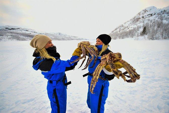King Crab Safari Winter