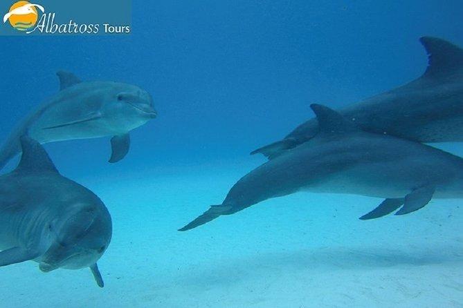 Dolphin Tour - Kizimkazi