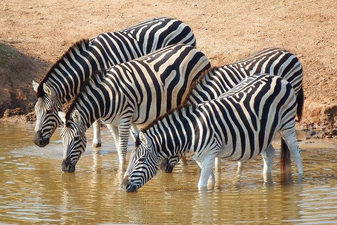 2-Day Safari Tour to Lake Mburo National Park