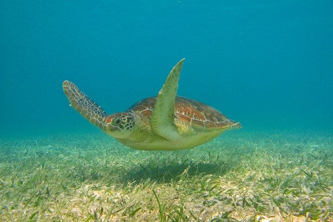 Private Tulum mayan ruins & Snorkel with Turtles in Akumal Adventure