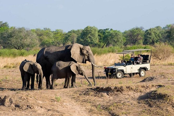 Small-Group Tour to Zambezi National Park