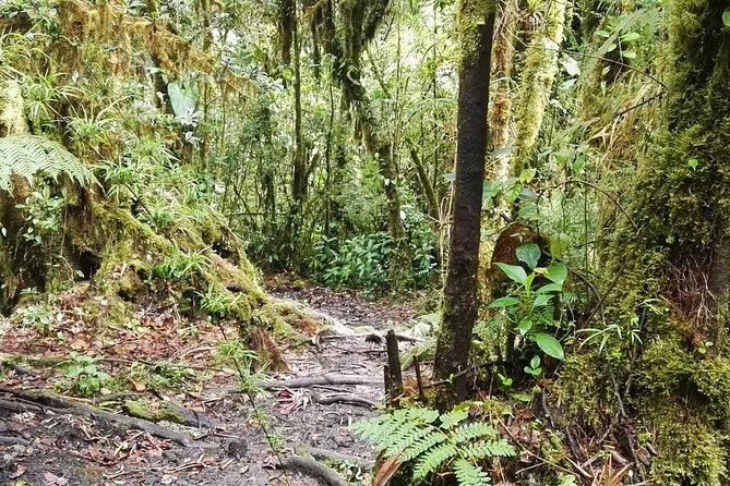 Barva Volcano Route, Braulio Carrillo National Park