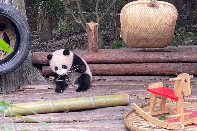 Dujiangyan Panda Center and Dujiangyan Irrigation System One Day Tour